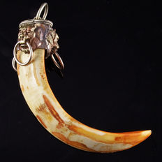 Hunting Trophy - Wild Boar Tusk with brass cap, lion-head design - 13,2 cm - 77,69gm