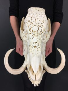 Hand-carved Balinese Wild Boar skull - Suidae sp. - 38 x 24 x 27cm