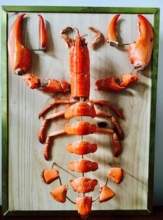 Common Lobster - dis-assembled - Homarus gammarus - mounted on board - 38 x 28cm