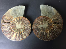 Pair of sectioned ammonite - Cleoniceras sp. - 12,5 x 10 x 1 cm - 460 g
