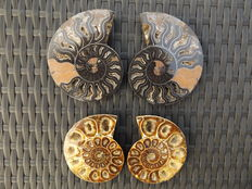 Ammonites - Cleoniceras sp. - 110 mm and 94 mm - 618 g (2 pieces)