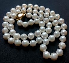 Necklace composed of salt water cultured Akoya pearls, with clasp in 18 kt (750/1,000) yellow gold.