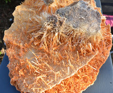 Exceptionally large cluster of Selenite crystals - 40 x 26 cm - 850gm