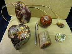 Interesting Petrified Wood collection  - 4,3 to 12cm - 2,2kg  (6)