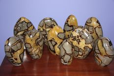Lot with Septarian polished - 11 to 18 cm - 10.6 kg  (10)