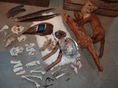 Taxidermy - large and diverse Lot - mammal, bird and reptile specimens etc