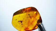Baltic amber with  insects 15.60 x 12,50mm!