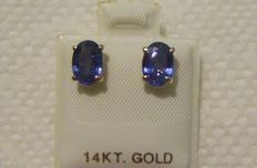 Solitaire Natural blue Sapphire yellow gold earring , 2.40-ct total ** No reserve **