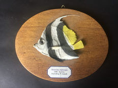 Taxidermy - Schooling Bannerflish (Butterfly Fish), on wall-plaque - Heniochus diphreutes - 20 x 3 x 16cm