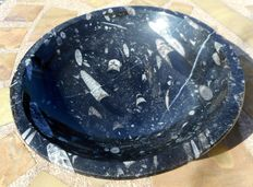 Magnificent bowl of fossil Marble with Orthoceras fossils inside.