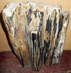 Fossil - Trunk of Petrified Wood - 50 cm  - 26.4 kg