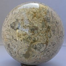 Oceanic Fossil Marble - 12 cm - 3800 gm