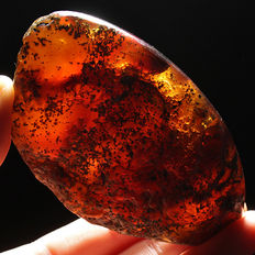 Natural Polished Blue Amber – Mexico – 72x43x24mm – 42.6 grams