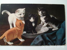 lot of 50 cards on cats