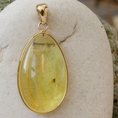 Gold And Baltic Amber pendant with fossil insect