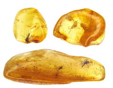 Fossil insects (4) in Baltic amber - 3 pieces - 2,0 x 0,7x 0,4 cm; 1 x 1 x 0,4 cm, 0,7 x 0,7 x 0,3cm