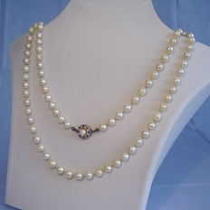 Genuine white Akoya pearl necklace with gold clasp with sapphires 0.16ct.