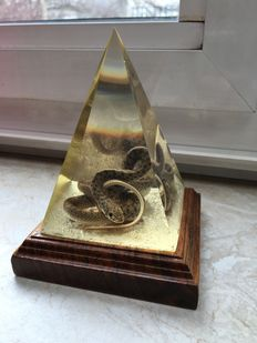 Garter Snake preserved and encased in glass pyramid with base - Thamnophidae sp. - 11 x 9cm