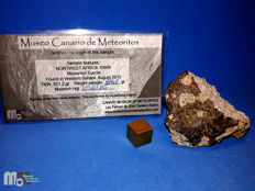 Meteorite NWA 10909, monomictic eucrite of the MCM. 64.1 grams