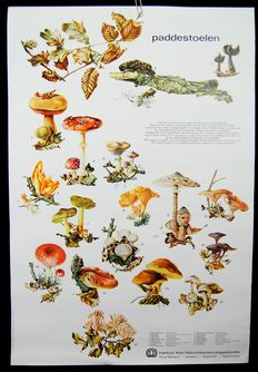 """Lot of 5 school posters or school maps of nature conservation education after illustration of R Westra. Edition on paper """"Ditch and lake"""", """"Our dunes"""", """"Our forests"""", """"Our Heath"""" and """"Mushrooms""""."""