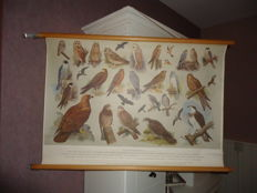 Nice rollable linen school poster by H.J. Slyper: Owls and birds of prey