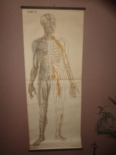 """Two anatomical school posters / school maps of """"the nervous system"""" and """"nose, mouth and pharynx, oral cavity, respiratory and digestive organs; d. chest; e. lung designed for """"the ORANGE cross"""""""