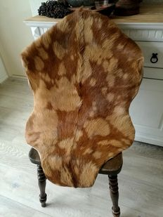Large Nubian goat skin in special colours