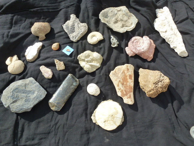 Lot of French fossils (18 specimens)