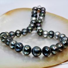 Cultivated pearl necklace from Tahiti - Semi-round - Ø 12 x 13.6 mm - 925 magnetic silver clasp.