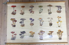 Roll up linen school poster with mushrooms