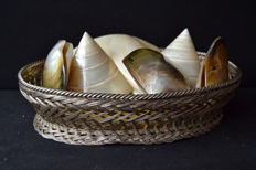 Silver  plated basket with mother-of-pearl shells -