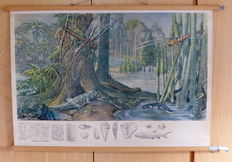 2 Linen roll-up school posters - Coal forest and Jong Tertiarre