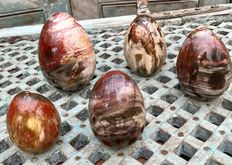 Unusually coloured Petrified Wood eggs - 7,5 tot 12,1 cm - 3,33kg  (5)