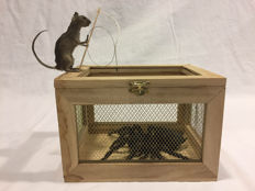 "Cabinet of Curiosities - Taxidermy - ""The Tarantula Hunter"" - Mouse with Goliath Bird-eater - Theraphosa blondi - 20 x 25 x 15cm - 260gm"