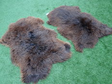 Two large thick quality sheepskins