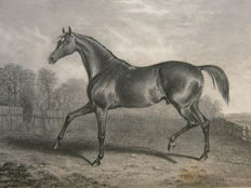 George Tattersall - The Pictorial Gallery of English Race Horses - 1850