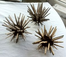 Dry-preserved Imperial Sea Urchins - Phyllacanthus imperialis - 15, 16 and 17cm  (3)