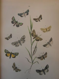 W. F. Kirby  - European butterflies and moths - without date (1890)