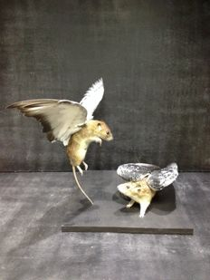 "Fabulous Taxidermy Chimaera - ""Pigeons are Flying Rats..."" - 40 x 30cm"