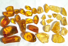 Interesting Amber collection with different inclusions - 0.7cm - 3.7cm length - 33 pieces
