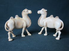 Pair of antique ivory statues of camels - China - Approx. 1910