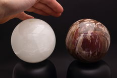 Calcite and Petrified Wood spheres - 9.49 and 9.58cm - 2415gm  (2)