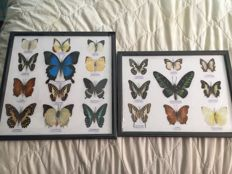 Exotic Asian Butterflies - 31 x 25cm and 32 x 32cm  (2)