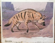 "Neave Parker (1910-1961) - Original illustration ""Aardwolf"" - early 1950s"