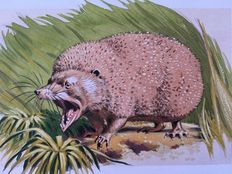 "Neave Parker (1910-1961) - Original illustration ""Spiny tenrec"" - early 1950s"