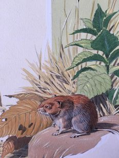 "Neave Parker (1910-1961) - Original illustration ""Bank vole"" - early 1950s"