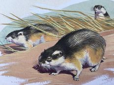 "Neave Parker (1910-1961) - Original illustration ""Lemming"" - early 1950s"