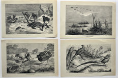 14 ornithological copper engravings of Figuier, Louis, 1819-1894, Reptiles and birds: a popular account of the various orders ..., 1869