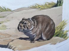 "Neave Parker (1910-1961) - Original illustration ""Cavy"" - early 1950s"