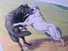 "Neave Parker (1910-1961) - Original illustration ""Wolf"" - early 1950s"